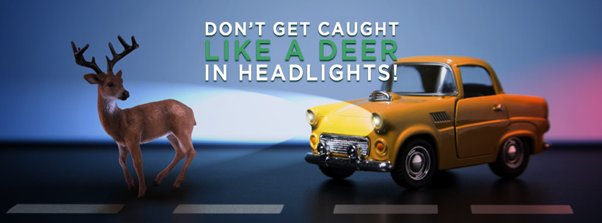 toy car shining headlights on toy deer