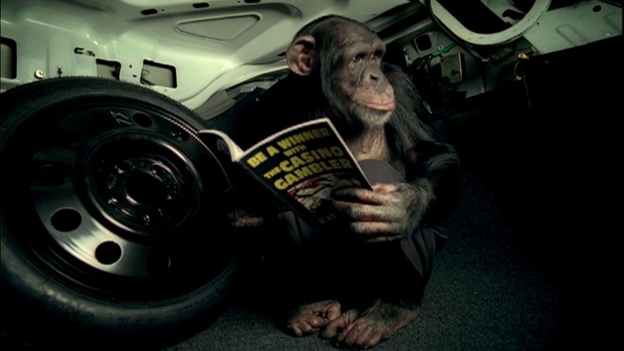 monkey holding magazine in trunk of vehicle