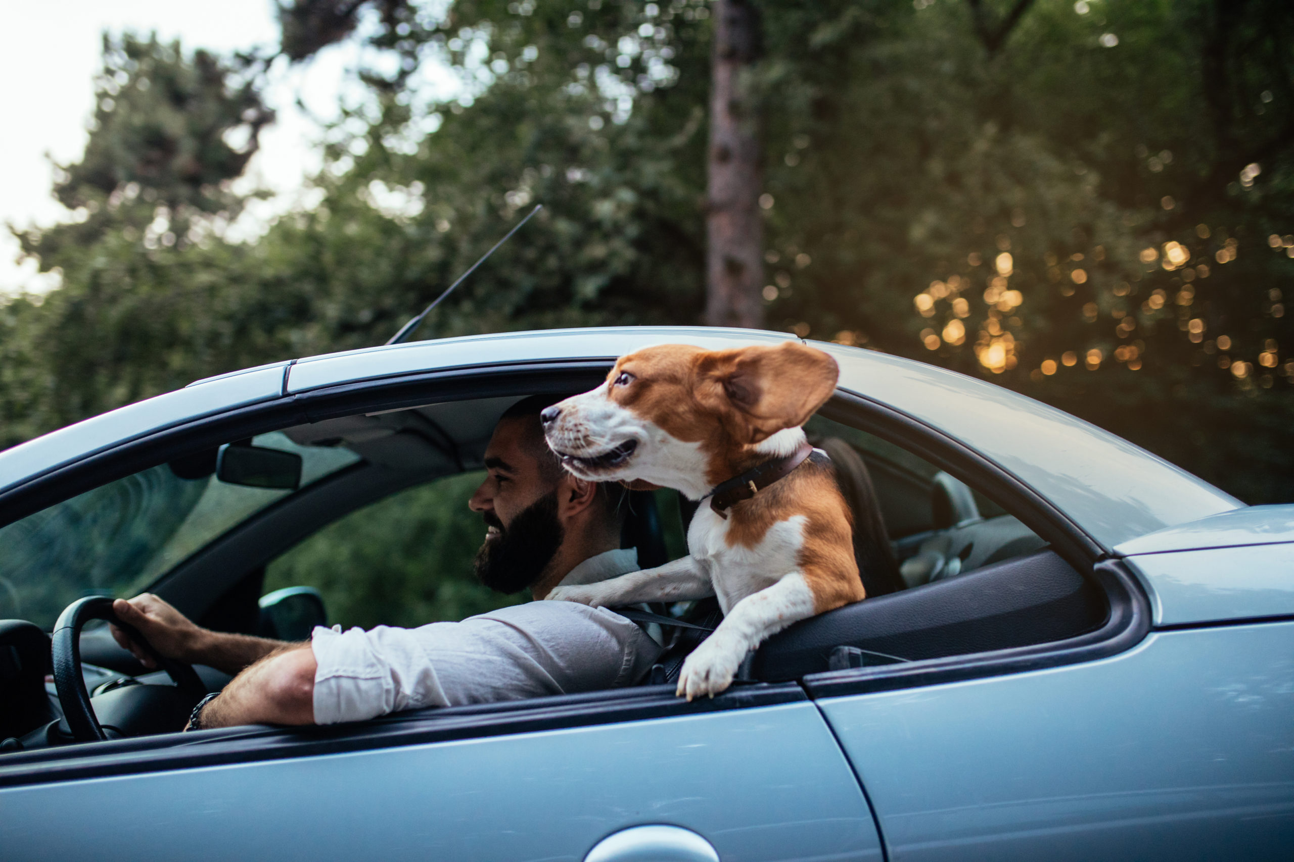 Shot of a young man riding with a dog in the car.