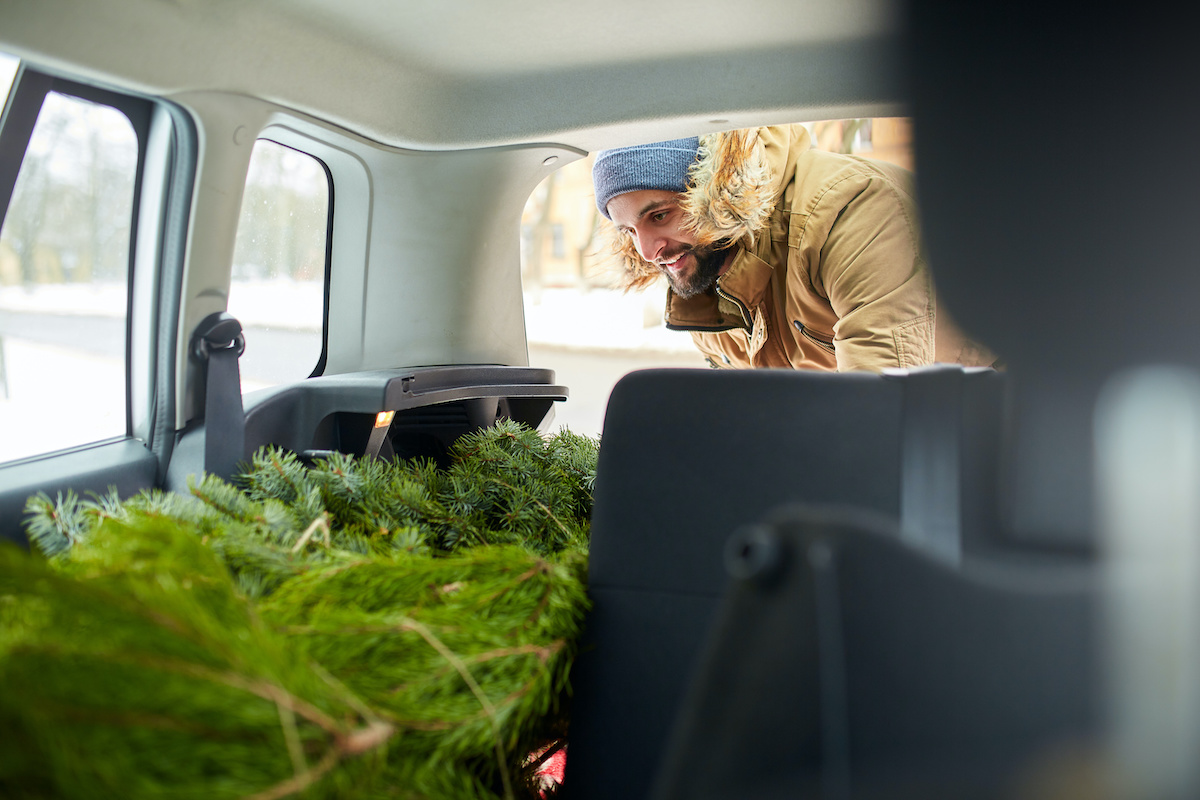 bearded man loading christmas tree into the trunk of his car, inside view.